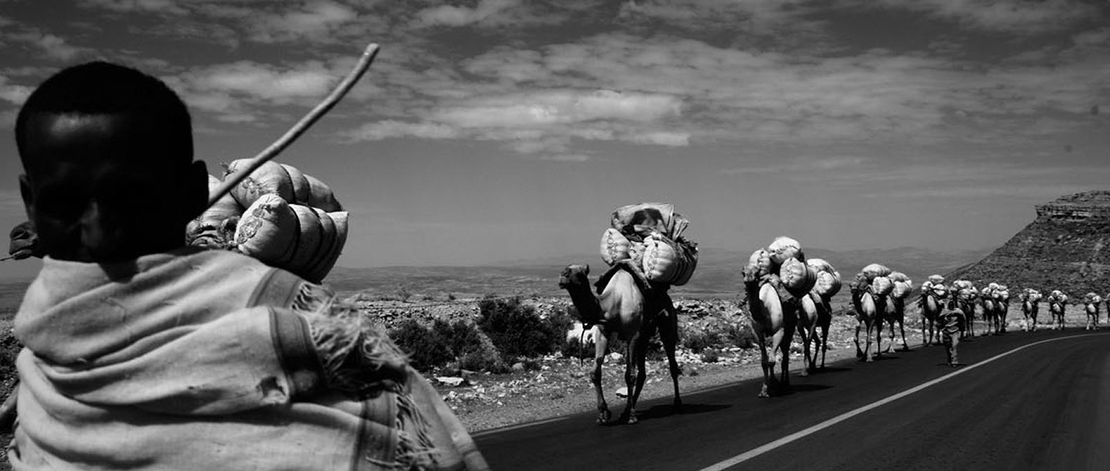 Camel caravan, Afar