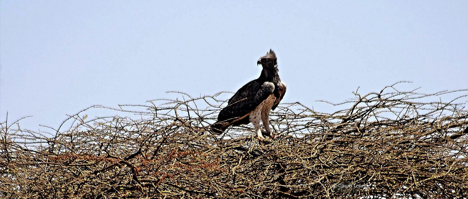 Ethiopia a Birdwatchers paradise